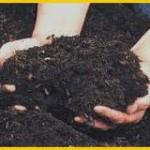 pupuk-organik-agribisnis-pepaya