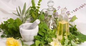 informasi budidaya tanaman herbal di indonesia
