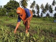 informasi petani tanihub
