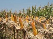 cara menjual hasil pertanian secara online