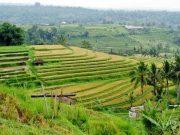 ide bisnis pertanian di masa depan