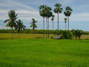 kerjasama bidang pertanian indonesia-kuba